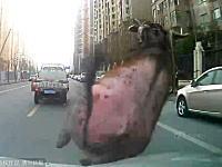 街に出没した雄牛をパトカーで何度もドーン!と轢くwなかなか豪快な方法やねw