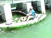 これは叫ぶわwカヤック釣りで超巨大な魚を釣り上げた男の雄叫び!すげえw