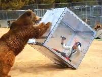 テレビ番組の裏側。この熊に襲われているのイモトアヤコじゃねえ?W