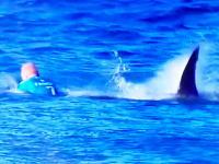 南アフリカで行われていたサーフィンの大会でサーファーがサメに襲われてしまう。その瞬間。