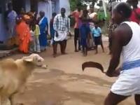 羊の逆襲。羊の首を大きなナイフで切り落とそうとした男性が逆にやられる