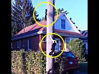 リスを追って電柱に登ったニャンコの動画ワロタ。リスの方が一枚上手。