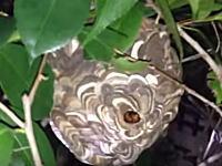 こんな手があったのか!スズメバチの巣を安全に駆除する画期的なアイデア。これはまじ頭ヨスギ!